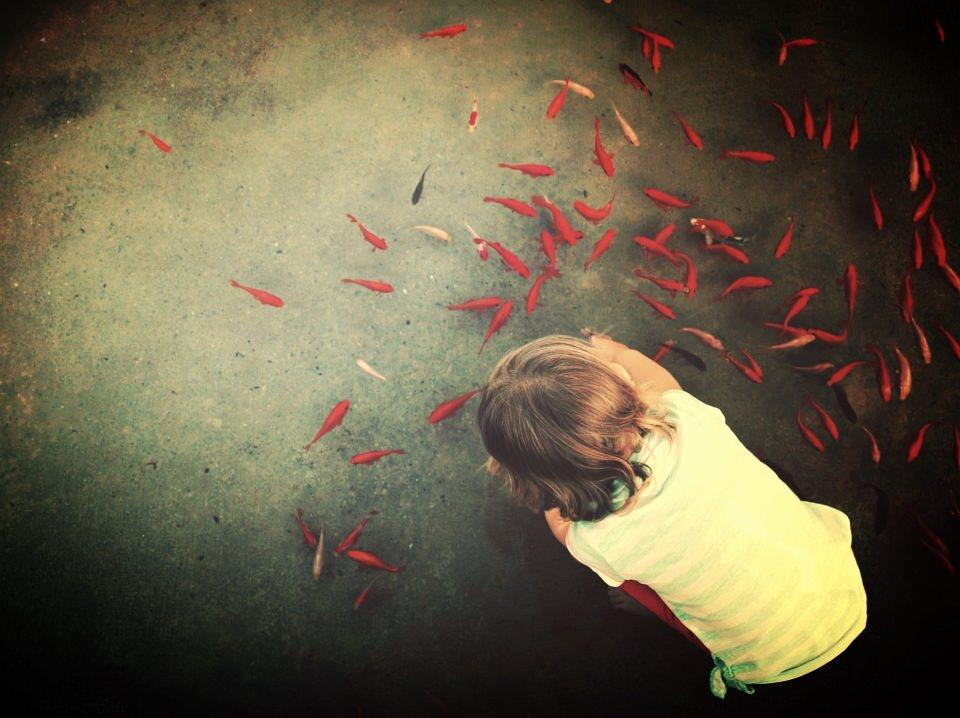 Ein Kind lehnt sich über einen Teich, in dem ein Schwarm roter Fische schwimmt.