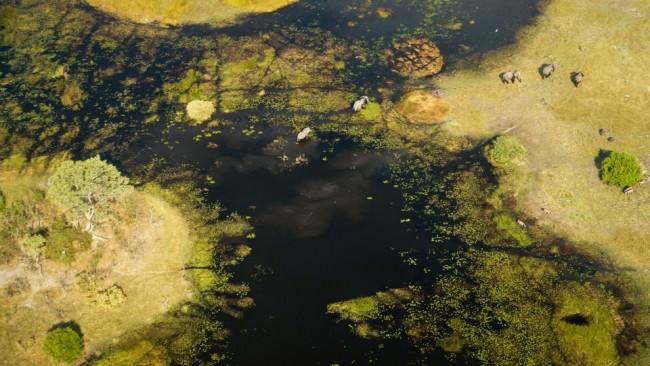 Luftaufnahme einer fleckenweise grün bewachsenen Seenlandschaft, in der ein paar Elefanten unterwegs sind.