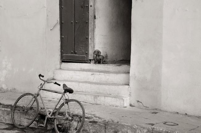Ein Hund sitzt am Treppenrand.