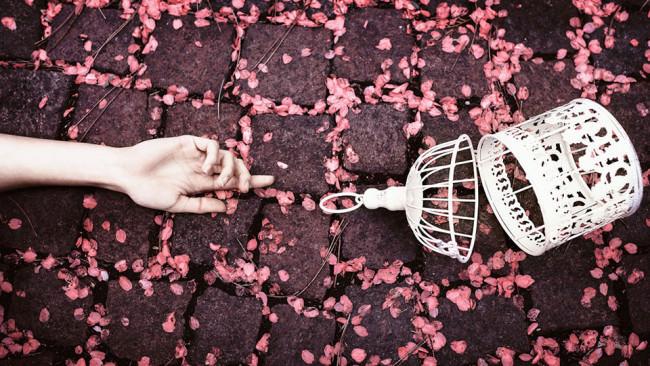 Eine Hand und ein Vogelkäfis auf einem blütenbedeckten Boden