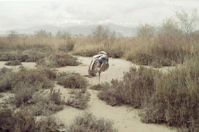 Ein Vogel steht in der Wüste.