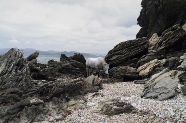 Ein Pferd steht zwischen Gestein.