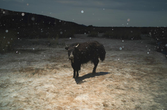 Ein Stier in der Landschaft.
