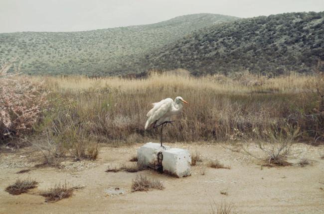 Ein Vogel steht auf einem Stein in der Landschaft.