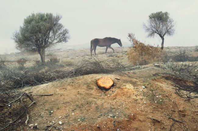 Ein Pferd steht zwischen zwei Bäumen, im Vordergrund ein Baumstumpf.