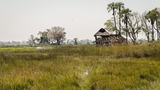 Hütte in einer grünen Savannenlandschaft.