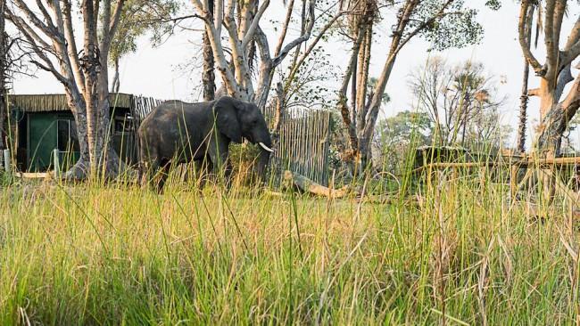 Elefant vor einigen Hütten in der Savanne.
