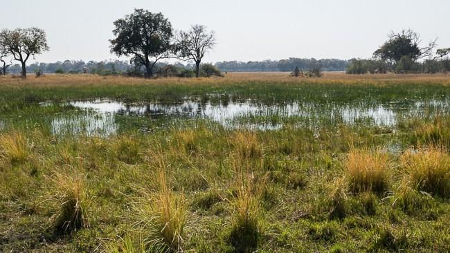 Savannenlandschaft mit Wasser.