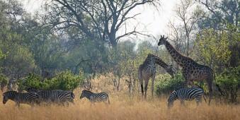 Okavangodelta © Dennis Wehrmann