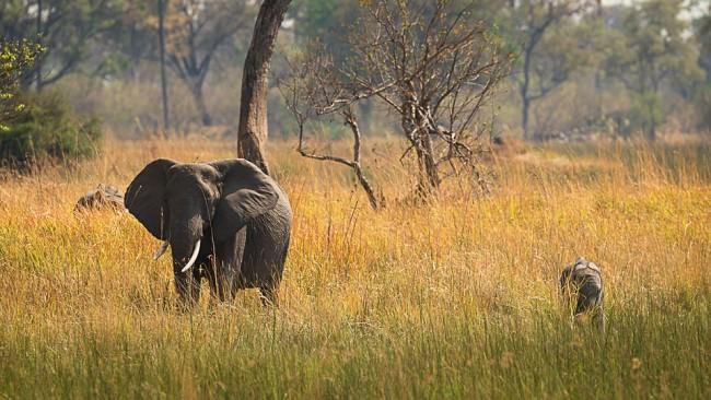 Elefantenmutter mit Jungem in der Savanne.