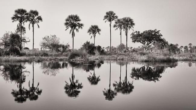 Palmen am Ufer eines Flusses spiegeln sich im Wasser.
