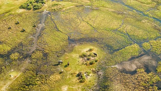 Deltalandschaft mit viel Wasser, Vegetation und einigen Elefanten.