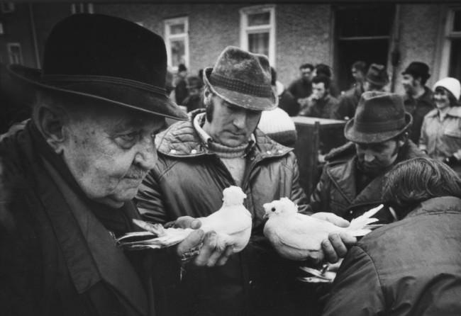 Ein Mann hält zwei Tauben in den Händen.