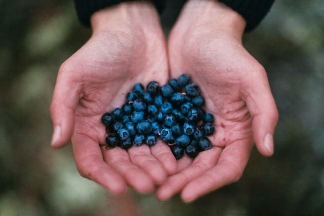 Blaubeeren in Händen