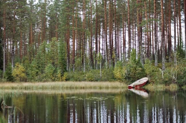 Bäume spiegeln sich im Wasser.