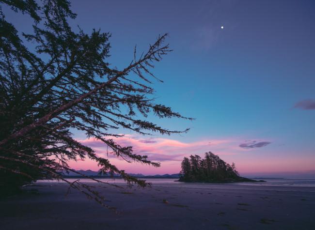 Wäldchen am Strand zum Sonnenaufgang.