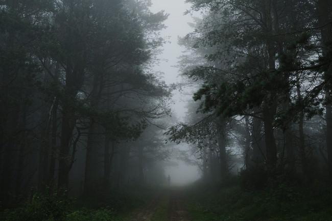 Ein Waldweg im Nebel