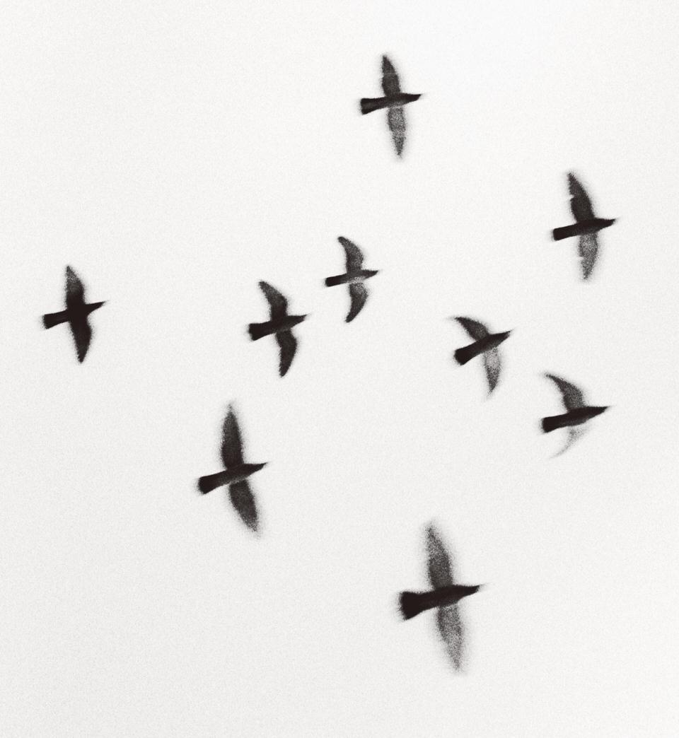 Vorbeiziehende Vögel, unscharf.
