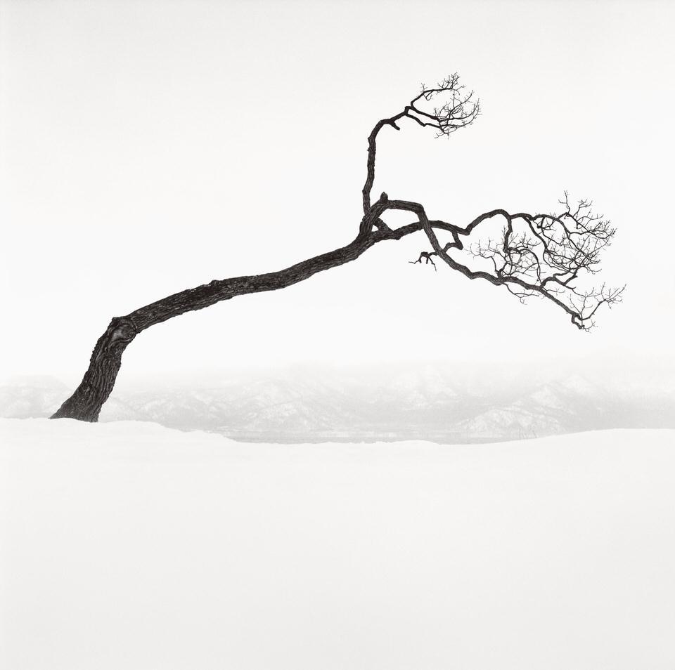 Ein Baum steht schräg in einer Schneelandschaft.