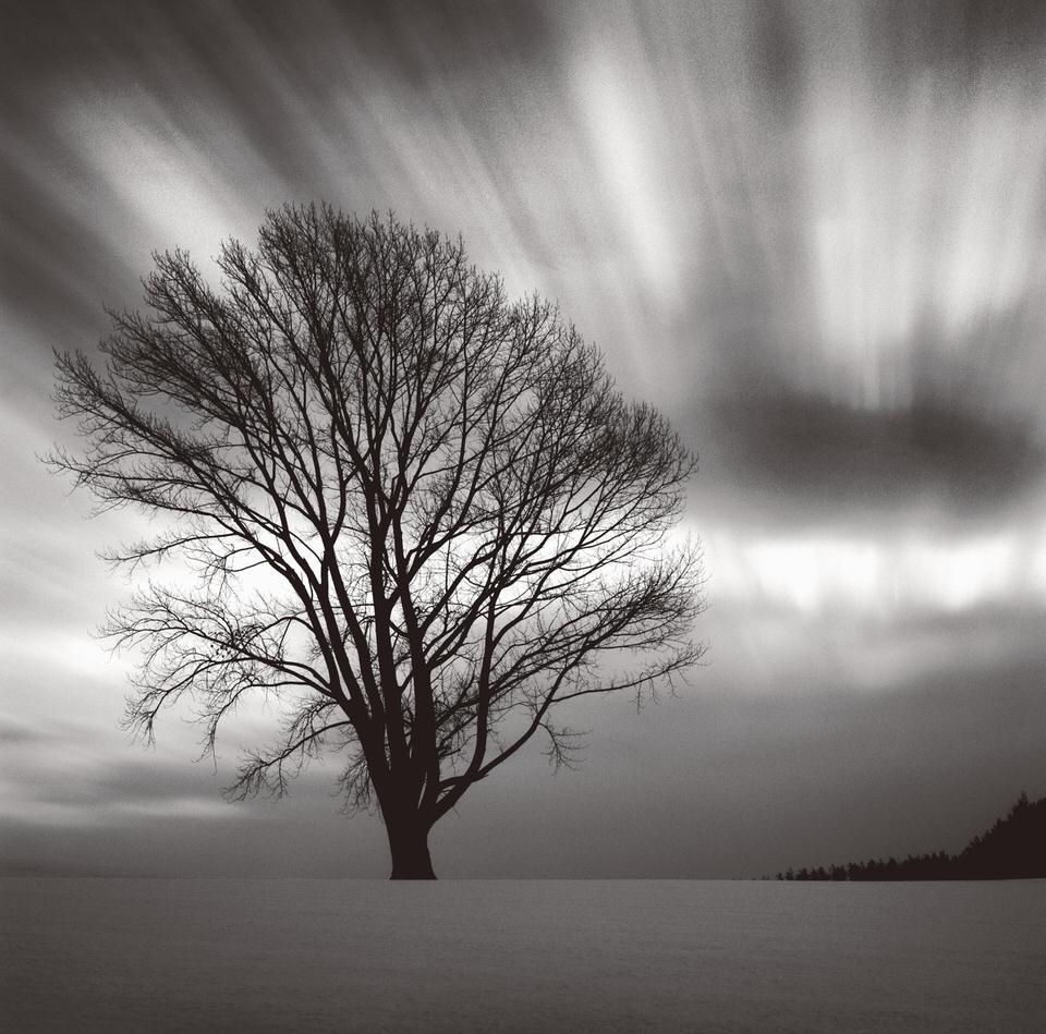 Langzeitbelichtung eines Baumes im Schnee.
