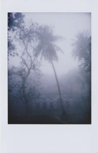 Palmen und ein Haus im Nebel