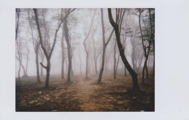 Ein Wald im Nebel