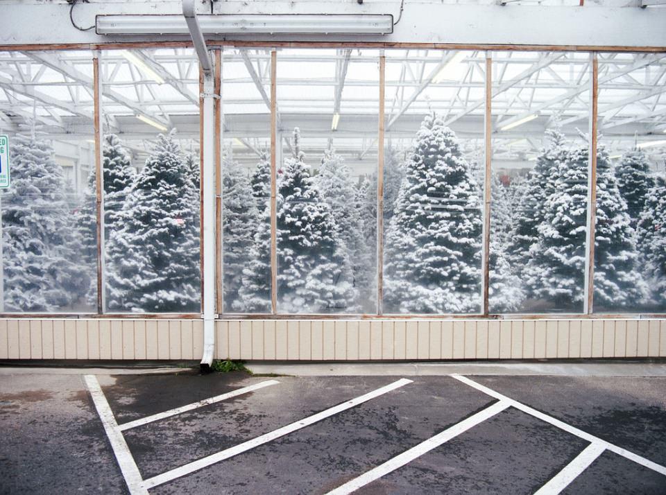 Schneebedeckte Tannenbäume in einem gläsernen Gewächshaus.