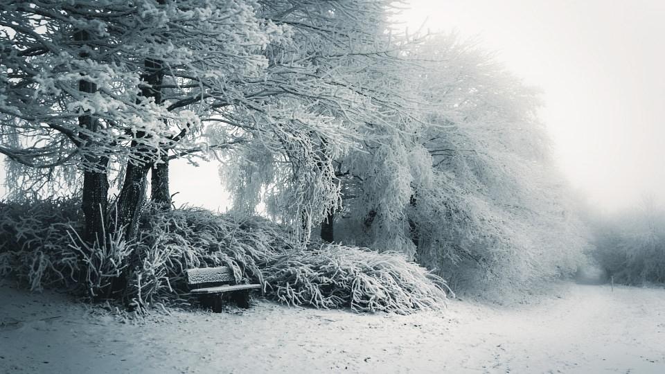 Verschneide Landschaft mit einer Bank vor ein paar Bäumen und Büschen.