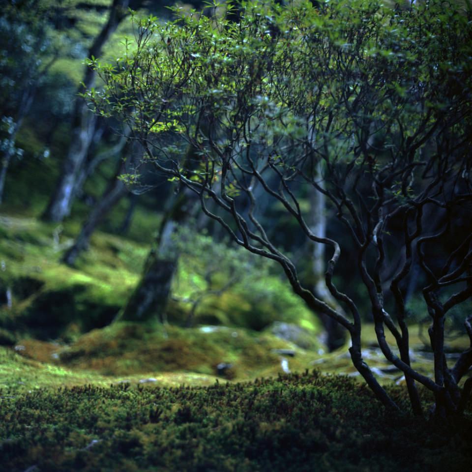 Details eines Busches in einem moosigen Wald.