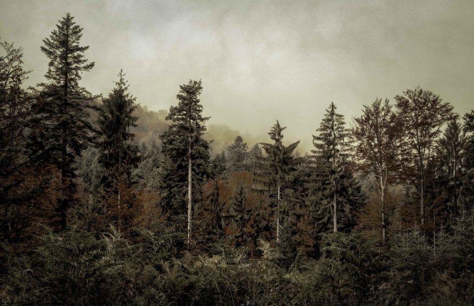 Blick in einen Nadelwald in Grün und Rostrot.