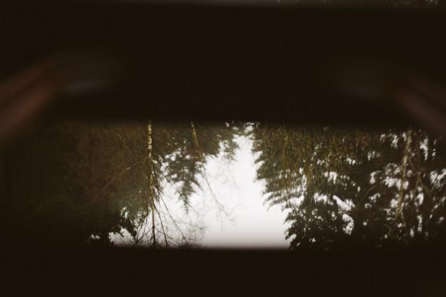 Ein Wald, umgedreht.