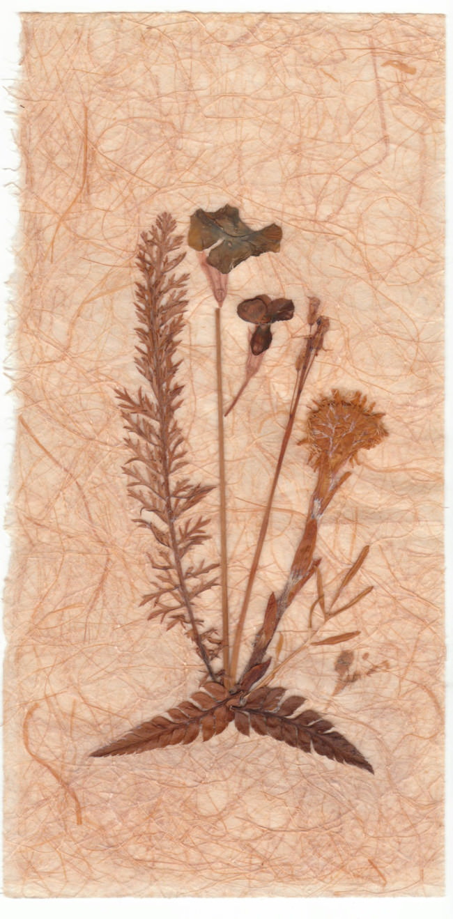 gepresste Blumen auf einem Stück Papier