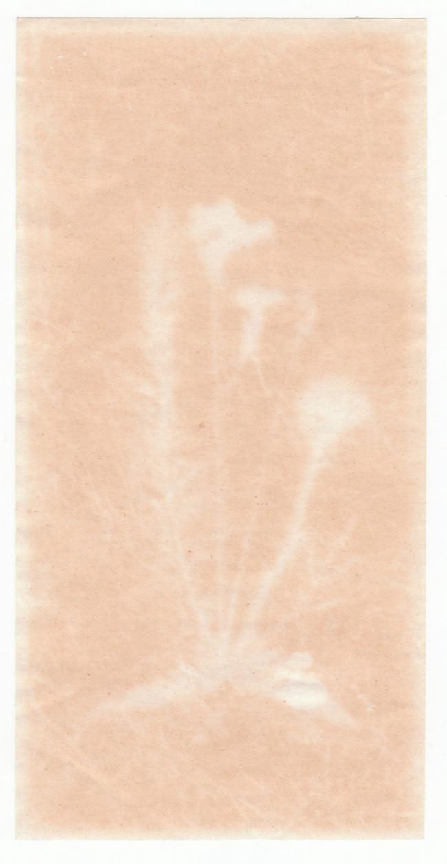 Abbild von Blumen