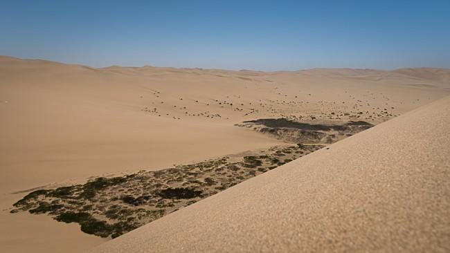 Flora in einer Wüste.