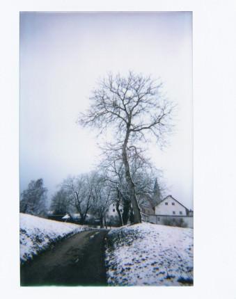 Verschneite Landstraße mit einem Baum und ein paar Häusern.