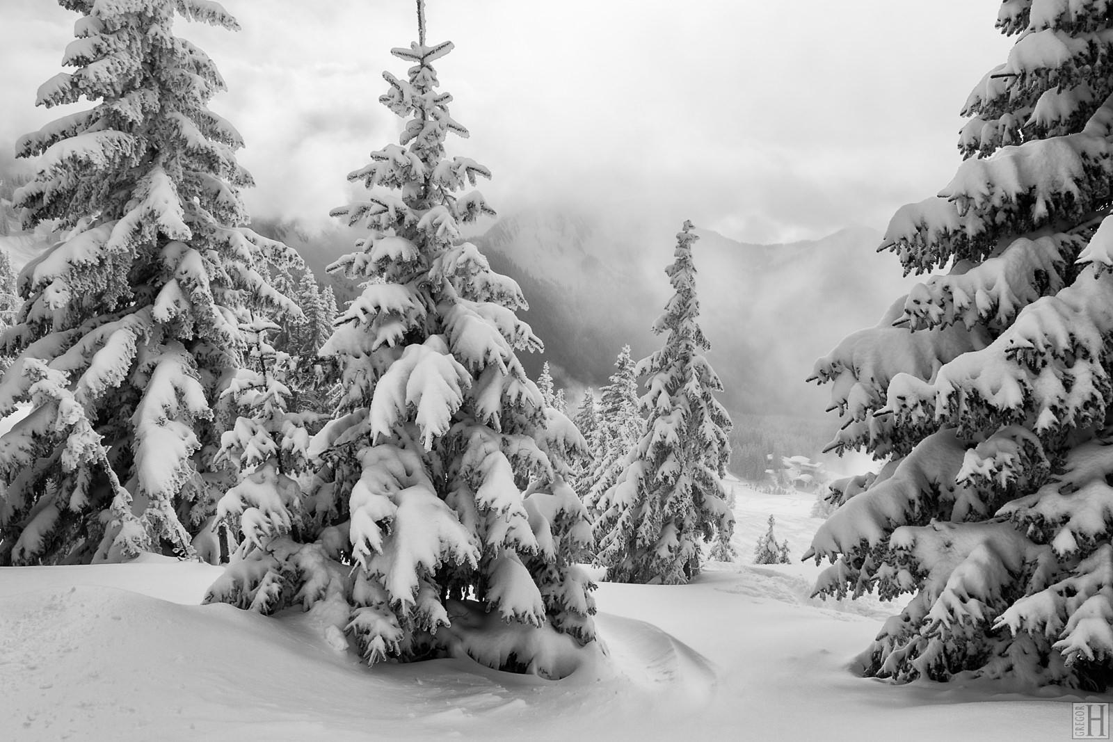 Eine Winterlandschaft mit schneebedeckten Tannen.