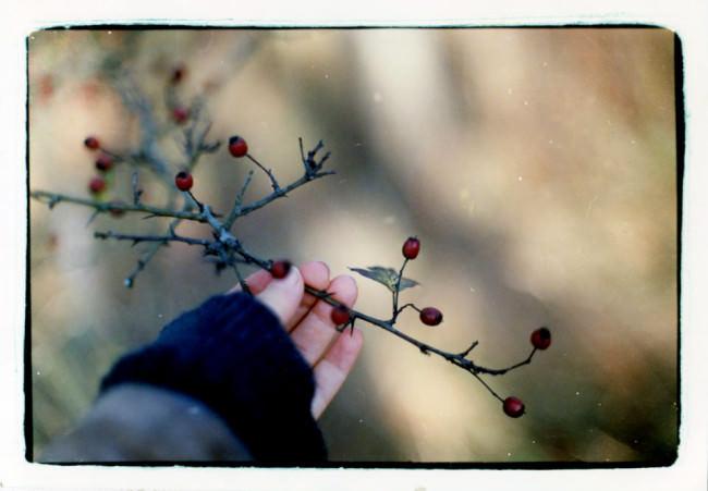 Eine Hand greift nach einem Ast mit Beeren