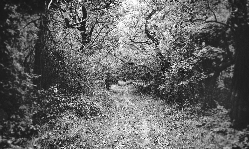 Pfad durch einen Wald, der von den Seiten über den Weg wächst, von oben helles Licht.