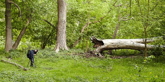 Eine Kamera, ein Baum, ein Mann