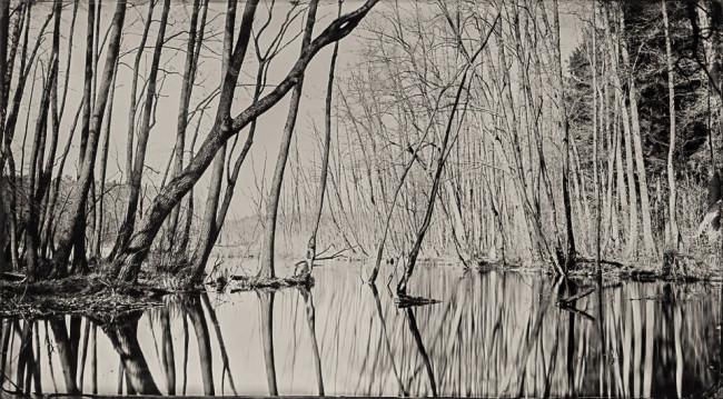 Wasser und Bäume