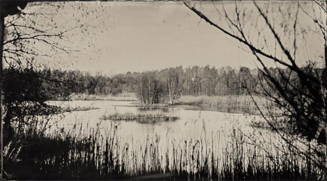 Landschaft, Schilf, ein See