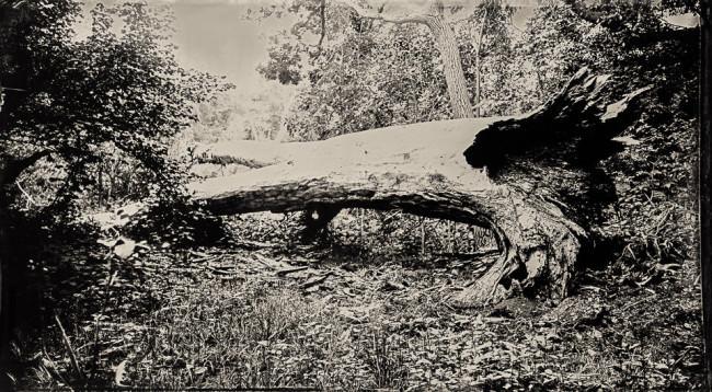Ein liegender Baum