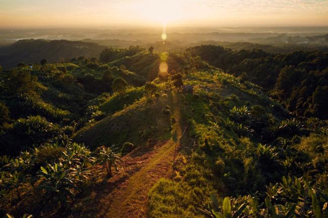 Eine grüne Landschaft im Sonnenuntergang