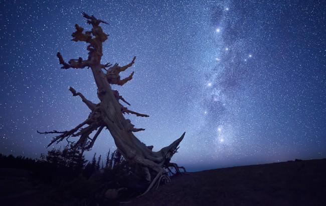 Nachthimmel mit Milchstraße hinter einem knorrigen toten Baum.