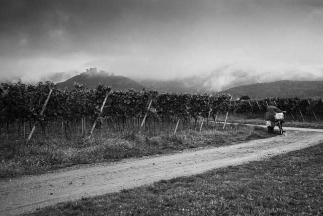 Frau schiebt ein Fahrrad auf einem Weg durch Weinstöcke, im Hintergrund Berge und ein Schloss, von Wolken verhangen.