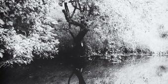 Ein ausladender Baum spiegelt sich im Wasser.