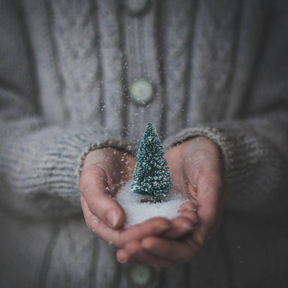 Ein kleiner Tannenbaum in einer Hand