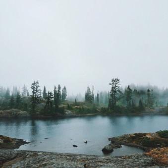 Diesige Landschaft mit einem lichten Nadelwald an einem See.