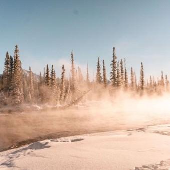 Nadelbäume in aufgewirbeltem Schnee, von der Sonne beschienen.