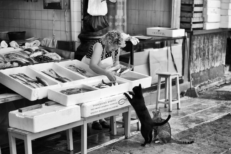 Zwei Katzen betteln vor einem Fischstand mit Verkäuferin.